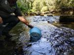 Medio Ambiente solta máis de 6.000 xuvenís de salmón no río Deva no marco do proxecto transfronteirizo Migramiño