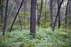 La Xunta apoya 130 acciones formativas para impulsar la competitividad de la industria forestal gallega