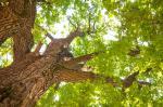 Medio Ambiente subliña con motivo do Día da Protección da Natureza a necesidade de apostar pola educación ambiental