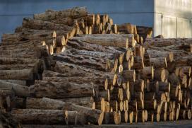 Case un cento de empresas galegas do sector forestal vanse beneficiar das axudas da Xunta para novos equipamentos, que mobilizarán preto 33M€